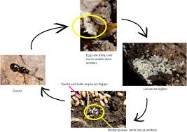 insect activity for kids u2013 growing with science blog