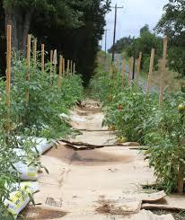 front yard vegetable gardening u2026 with cardboard duckweed gardening