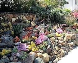 drought tolerant landscaping california native drought tolerant