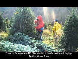 severts tree farm youtube