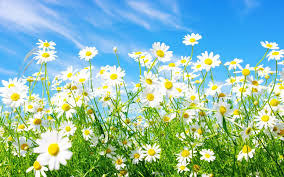 spring pictures for wallpapers group 69