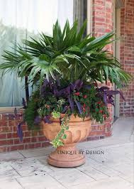 outdoor palm tree l 45 best palm container garden images on pinterest container garden