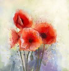 water color red poppy flowers painting flowers in soft color