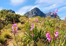 South African Wild Flowers - south african plant life