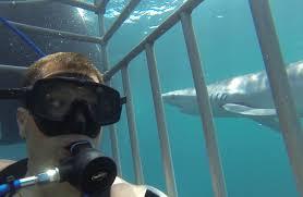 Shark diving montauk new york timothy maguire