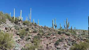 Arizona vegetaion images Free images landscape nature wilderness cactus hill desert jpg