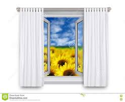 Sunflower Yellow Curtains by Sunflowers Through Open Window Stock Photo Image 81933208