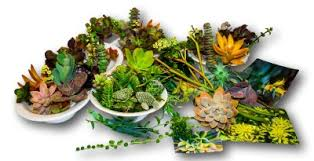 buy succulents online fat plants san diego