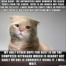 Sad Cat Memes - sad cat diary cat diary sad cat and hilarious