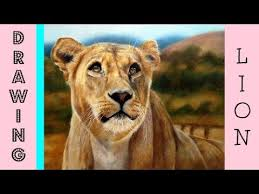 realistic lion speed drawing coloured pencil drawing