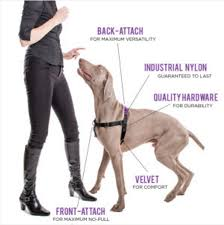 weimaraner vs afghan hound ask a dog trainer what u0027s the best harness for a dog that pulls