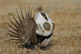 Audubon Backyard Bird Count by Great Backyard Bird Count Feb 17 20 Green News Update