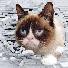 Meme Grumpy Cat - grumpy cat image gallery know your meme
