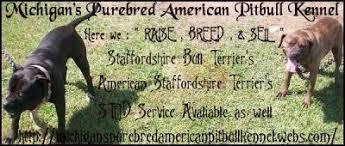 american pitbull terrier kennels in michigan michigan u0027s purebred american pitbull kennel pit bull social