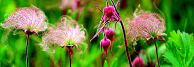 iowa native plants what u0027s in bloom may iowa natural heritage foundation