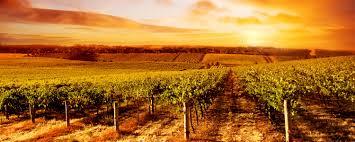 napaabout california wine country milliken creek inn napa