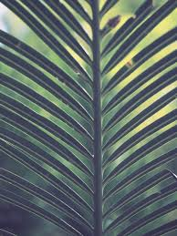 where to buy palms for palm sunday palm sunday brookside church