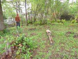native plant salvage foundation chickadee gardens april 2016