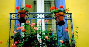 balkon blumentopf blumentopf fällt vom balkon wer zahlt wenns schäden gibt blick