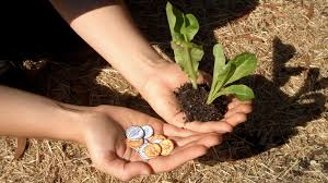 seed money coins you can plant by leafcutter designs u2014 kickstarter