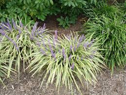 Heat Resistant Plants For Sun Sound Native Plants Heat Tolerant Ground Cover U Drought