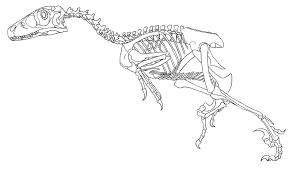 dinosaur skeleton coloring free download