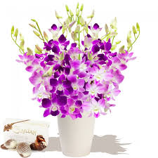 Orchid Delivery Orchids Direct Bouquets Orchids Delivered Orchid Plants