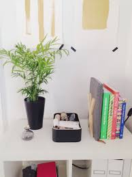 100 plant for desk garden indoor palm lowes indoor plants