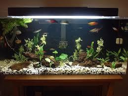 tropical fish aquarium community tank fish