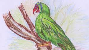 sketch beautiful parrot color pencils easy method