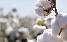 bureau veritas hong kong hong kong bureau veritas to verify cotton textile