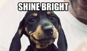 Weiner Dog Meme - 12 best dachshund memes of all time