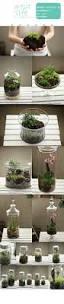 171 best terrarium images on pinterest terrarium ideas plants