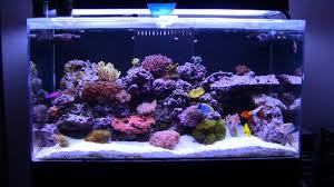 basic 5 saltwater types of fish tanks saltwater aquariums