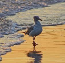 mary ellen hussey maryellenhusse2 twitter