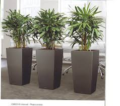 low light plants for office admin