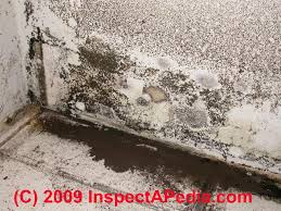 How To Remove Bathroom Vanity Bathroom Mold Cleanup Clean Up Tile Grout Joints Remove Bathroom