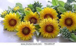 Sunflower Home Decor Sunflower Decor Stock Images Royalty Free Images U0026 Vectors