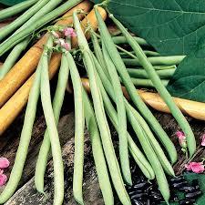 climbing vegetables