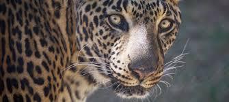 Arizona Wildlife Tours images Southwest wildlife conservation center wild animal rescue jpg