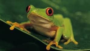 eyed tree frog and the forest animals me