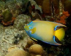 10 stunning glow in the dark animals flashlight fish amazing