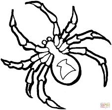 creepy spider coloring pages murderthestout