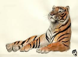 tiger sketch 1 by dolphydolphiana on deviantart