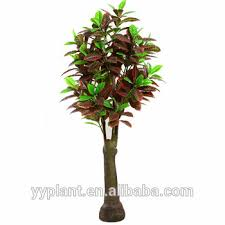 all kinds of ficus tree buy live ficus trees 0456 buy buy live