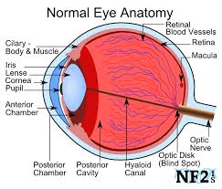 Blind Spot In Eyes Eye And Vision Issues