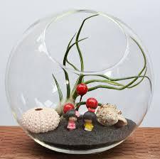 3pcs set succulent round globe flat bottom terrariums indoor