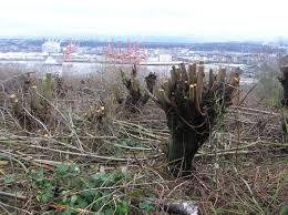 West Seattle Blog West Seattle Crime Watch Newest by City Will Receive 440 000 In Settlement Over Unauthorized Cutting