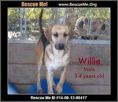 bluetick coonhound rescue georgia alabama redbone coonhound rescue u2015 adoptions u2015 rescueme org