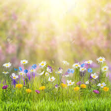 beautiful spring beautiful spring floral meadow with wild flowers stock photo